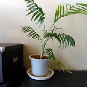 観葉植物の植え替え?